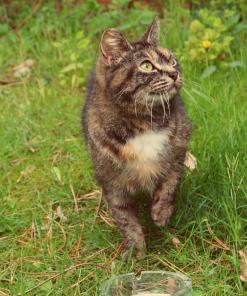 Vangkooien katten
